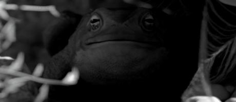 PYRRHOSOMA Teaser Trailer
